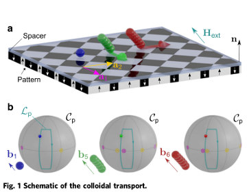 Simultaneous polydirectional transport of colloidal bipeds